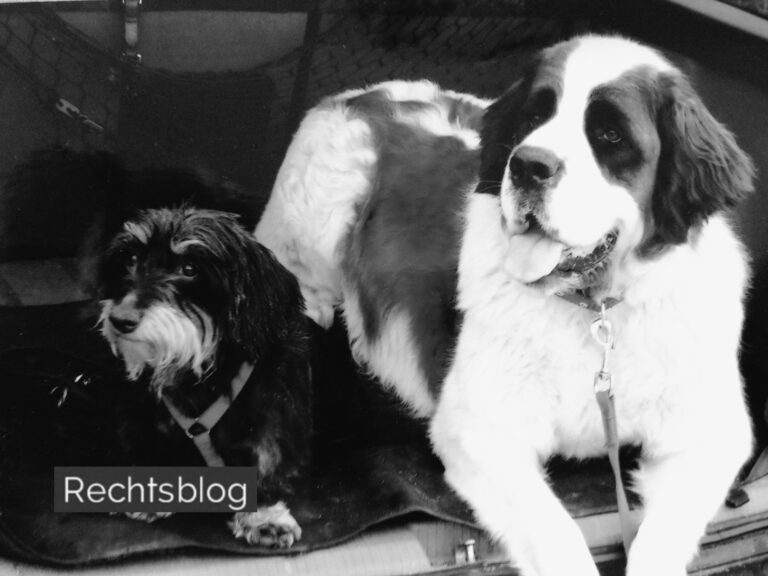 hundehalterhaftung